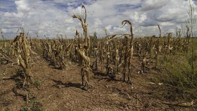 Landbouwschade door aanhoudende droogte - Droogte