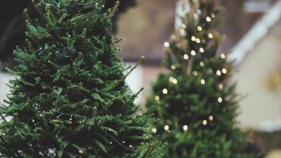 Gratis inzameling van kerstbomen op 18 januari - Kerstbomen.