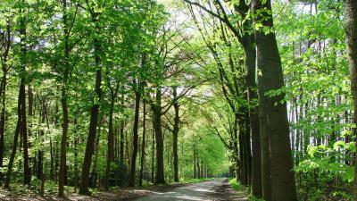 Opmaak gemeentelijk bomenplan - Antwerpse Heirweg.