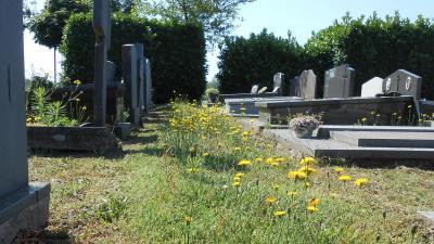 Aangepast 'bij-vriendelijk' groenbeheer op begraafplaats Oosteeklo - Begraafplaats Oosteeklo