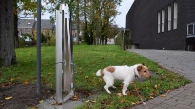Hondendrollen horen voortaan thuis in de hondenpoepbuis - Hondenpoepbuizen.