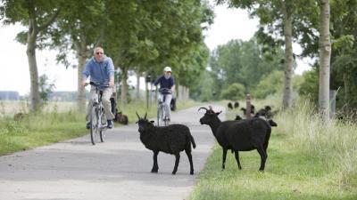Met de fiets naar het vaccinatiecentrum Hoge Wal -