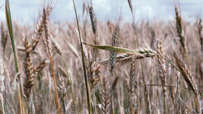 Ernstige droogte van 2020 erkent als ramp. -