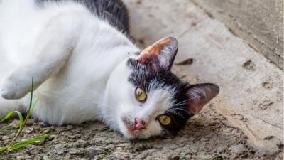 Zwerfkattenvangactie in september -